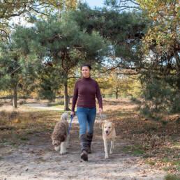 labrador en doodle bossen