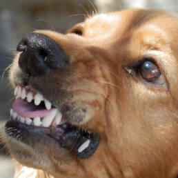 hond boos